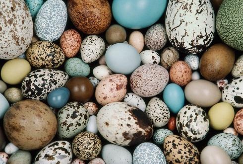 تخم بلدرچین,تخم پرنده ها