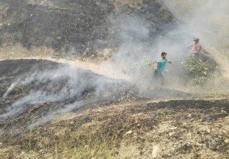 هزینه درمان جوان گچسارانی را سازمان جنگل ها پرداخت می کند