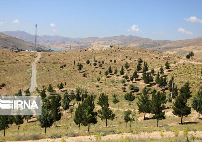 ۲هزار و ۶۷۲ هکتار جنگل دست کاشت در گچساران ایجاد شد