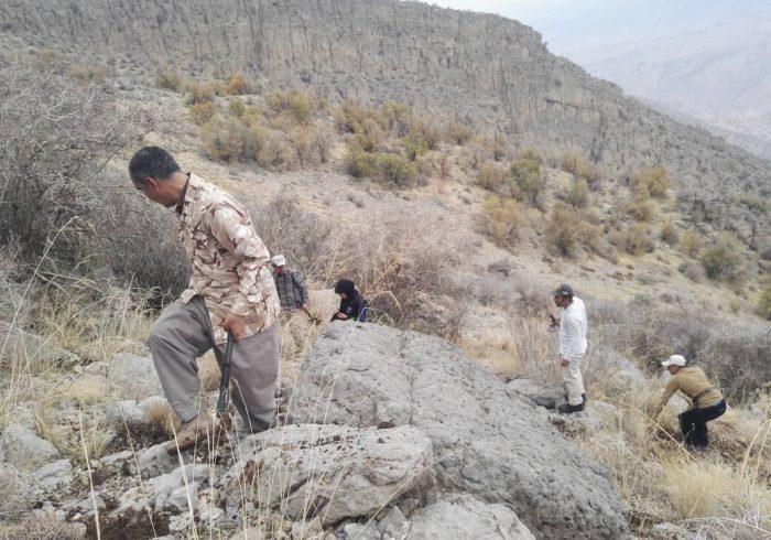 گیاه بومی جاشیر در منطقه حفاظت شده خامی گچساران کشت شد