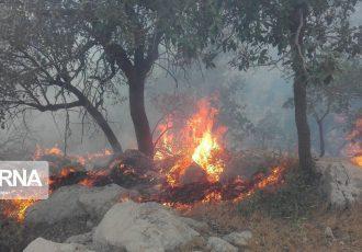 امسال ۳۸ فقره آتش سوزی در جنگل های کهگیلویه و بویراحمد مهار شد