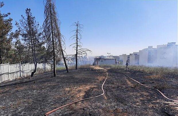آتش سوزی در جنگل افرا/ تنها حدود ۱۵۰۰ متر علوفه سوخت