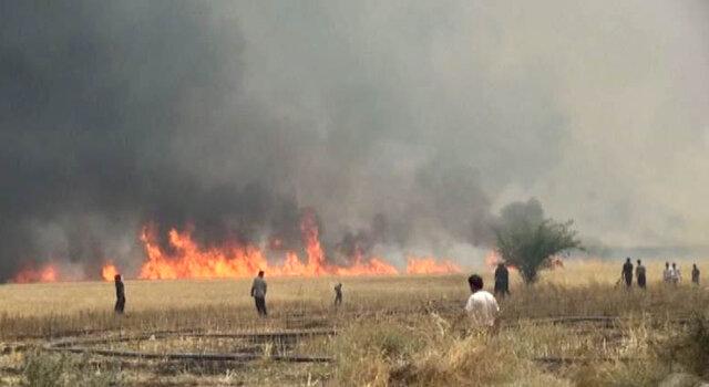 بیش از ۱۵۰ هکتار از مزارع گندم چرام در آتش سوخت