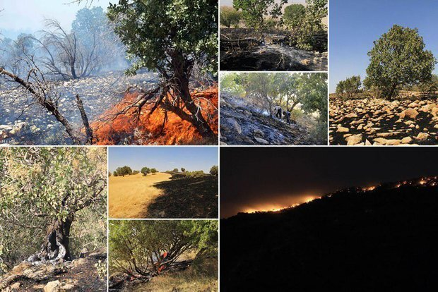 کابوس حریق برای جنگلهای کردستان/سهلانگاری عامل اصلی آتشسوزی