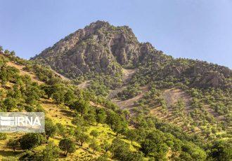 ۱۷۰ هزار هکتار جنگل بلوط در کهگیلویه و بویراحمد دچار خشکیدگی شد